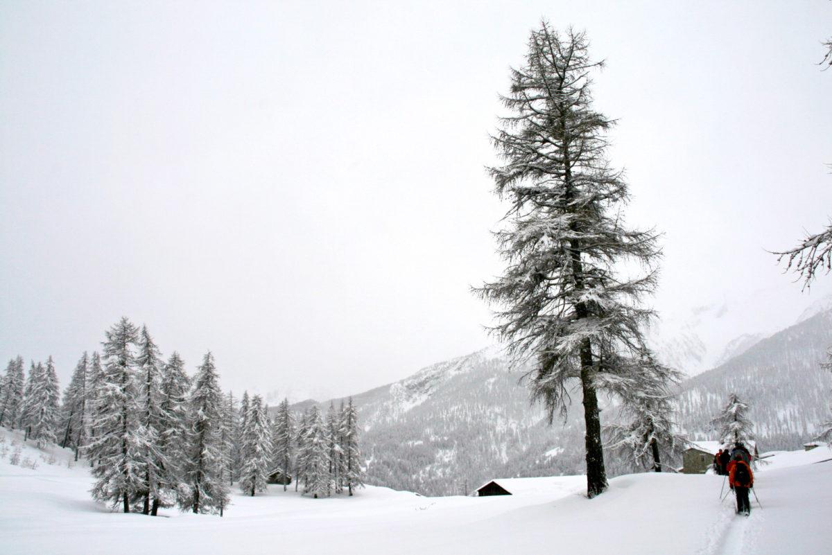 Promenade en raquettes, Hautes-Alpes