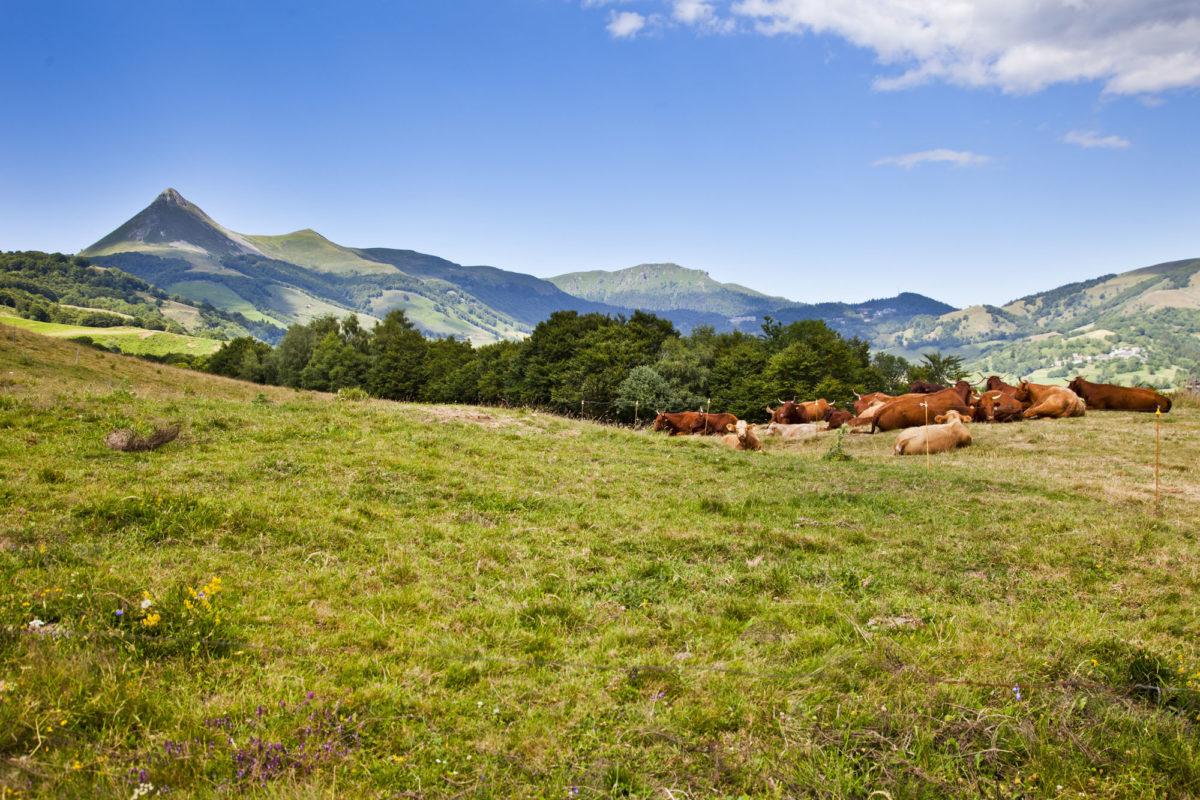 Région sauvage : Les monts du cantal, Auvergne.