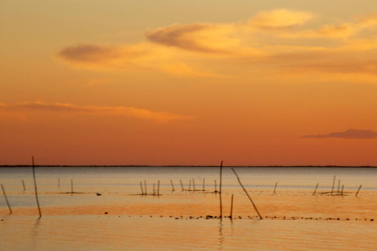 Région sauvage : Lumière de fin de journée, Camargue, Provence. © Elodie Rothan