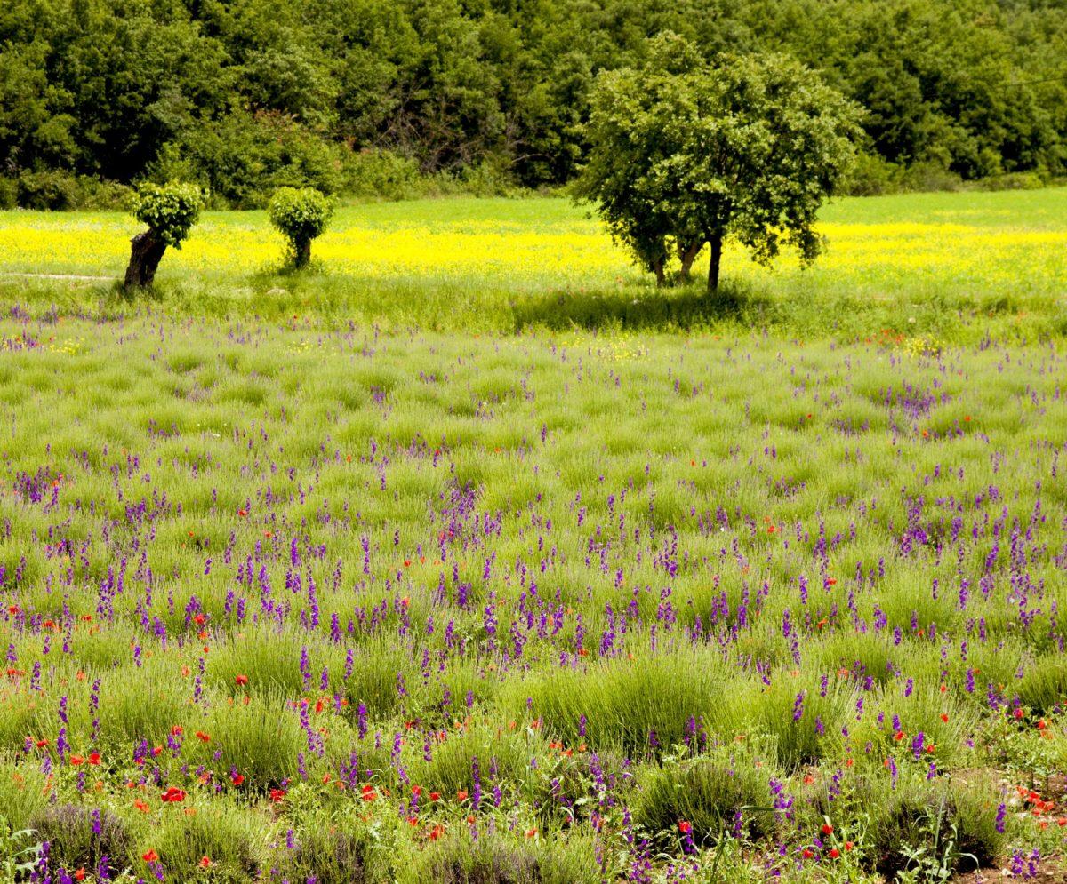 Balade dans les Coteaux varois en Provence