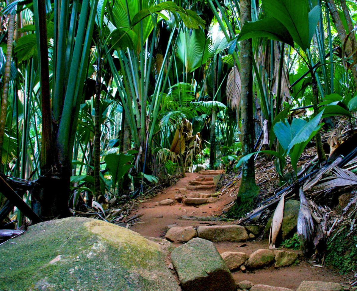 Vallée de Mai, île de Praslin, Seychelles.