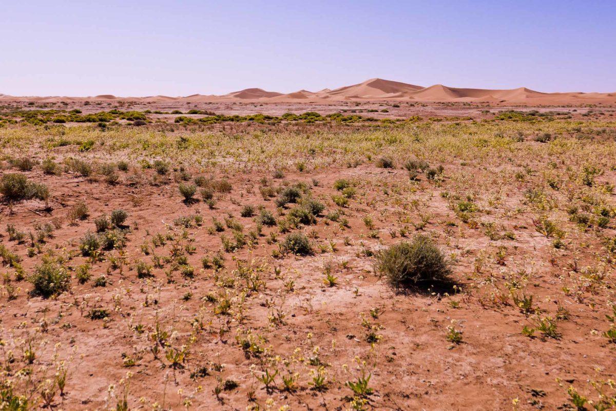 Le désert, Umnya Dune Camp, Maroc. © Elodie Rothan