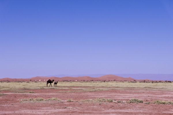 Le désert. © Elodie Rothan